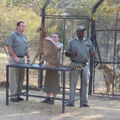 Moholoholo Wildlife Rehabilitation